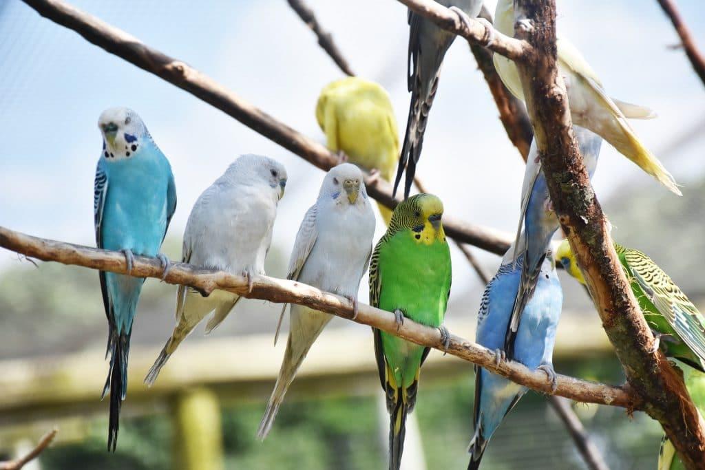 https://www.asmaa-zagora.com/que-faire-des-animaux-de-compagnie-en-vacances/