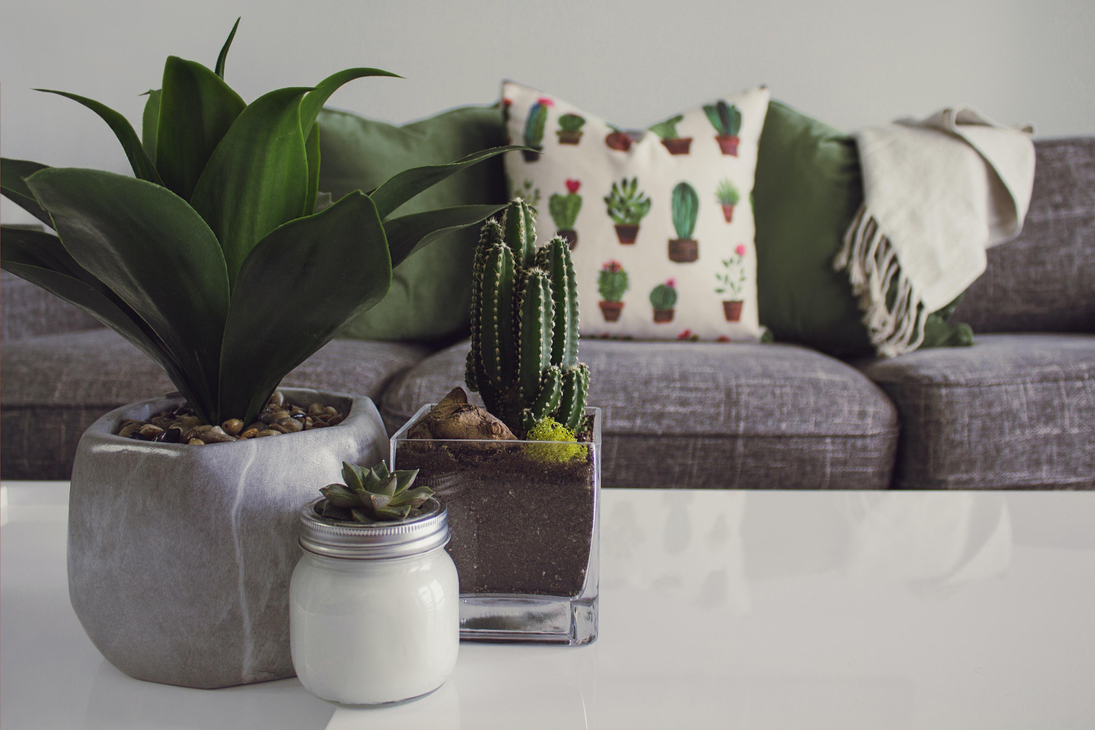 décorer intérieur studio plantes